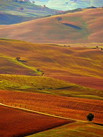 Rolling Hills of Toscana