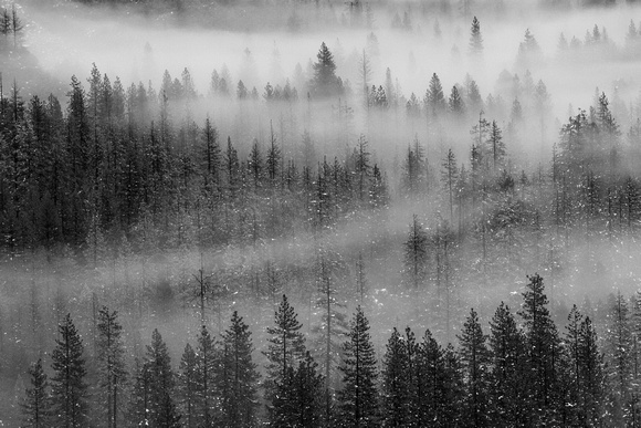 Winter Fog in the Valley